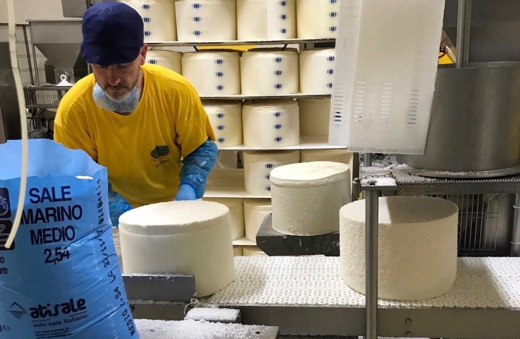 Piedmont Delights Production Gorgonzola Cheese