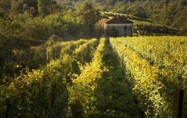 I vini dell'Alto Piemonte: un'introduzione