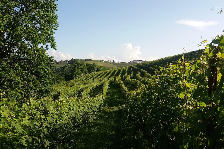 San Biagio Basso Piemonte Blog Basso Piemonte Langhe Roero Monferrato