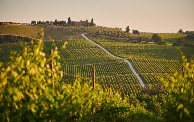 Discover the Barolo, wine of kings and king of wines