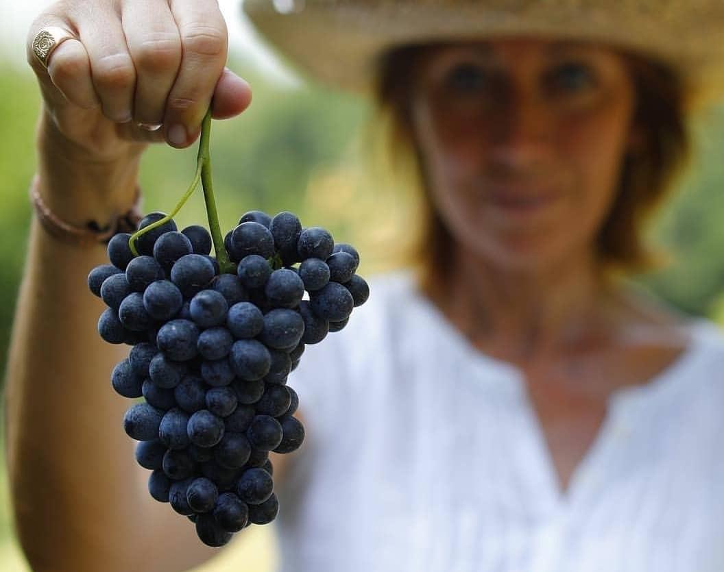 Uva Grappolo Barbera Piedmont Delights