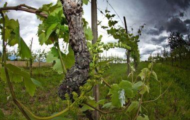 Può un fiume produrre vino?