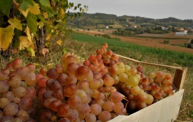 Experience Autumn in Piedmont