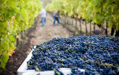 Choosing the right wine: Piedmontese wine or Tuscan wine?